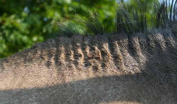 La dermite estivale, comment en venir à bout ?