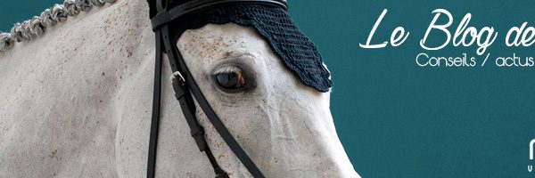 A la découverte de la sellerie Mon cheval.fr, la sellerie 2.0 !