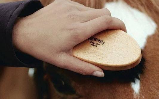 Un pansage parfait pour un cheval parfait !