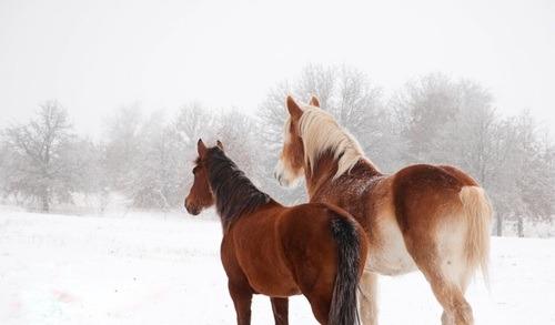 Quel cerveau possède mon cheval ? Horsenality
