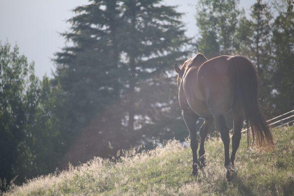 Vendre son cheval: mes conseils !