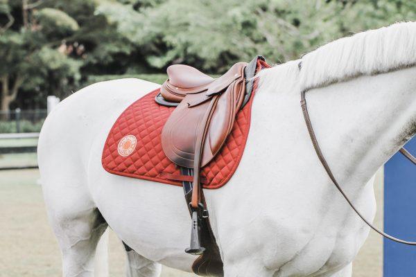 La nouvelle selle Vivace par Hermès Sellier :