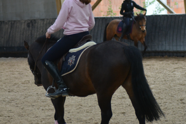 Muscler l'encolure de son cheval