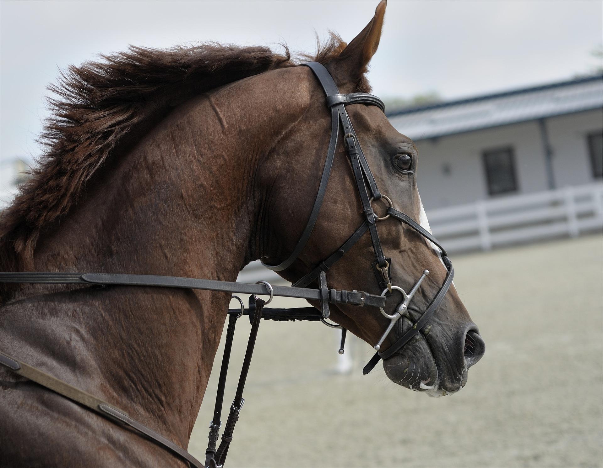 horse-691477_1920