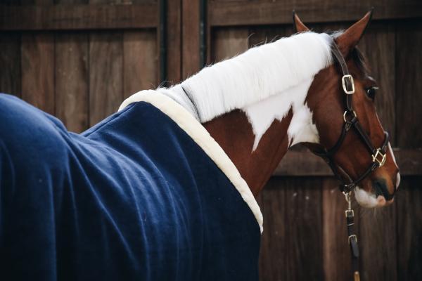 Choisir la couverture adaptée à son cheval