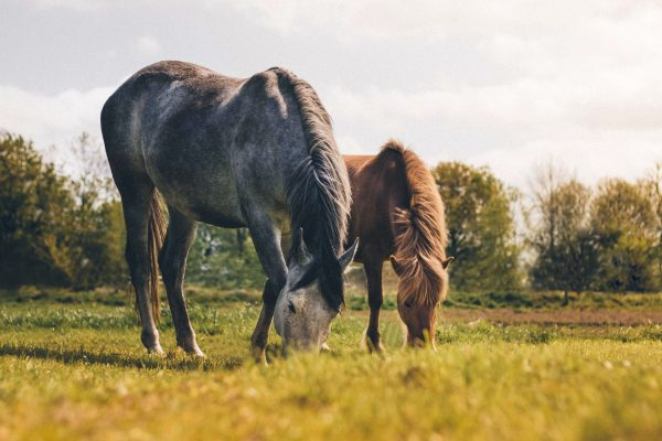 Choisir l'assurance de son cheval