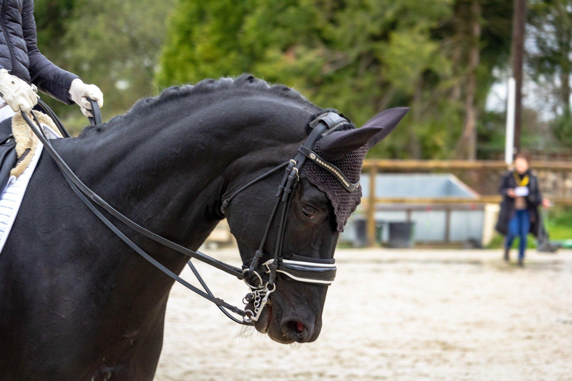 horse-4114143_1920