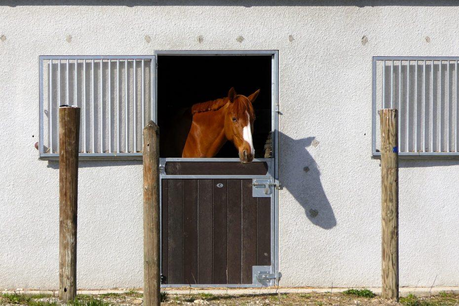 horse-3272667_1280
